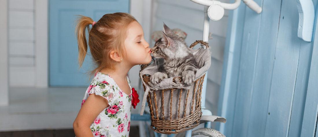 Kitten Bundle Offer